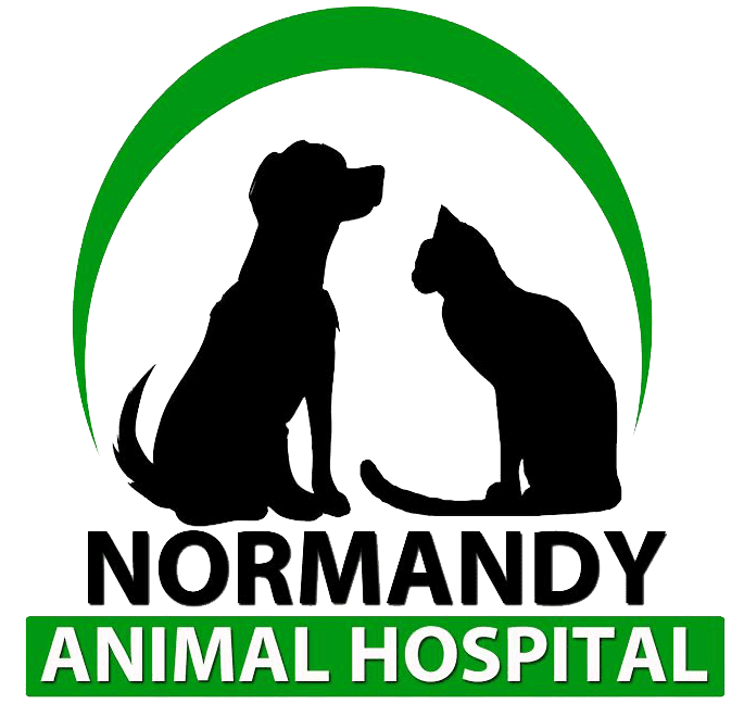 Normandy Animal Hospital
